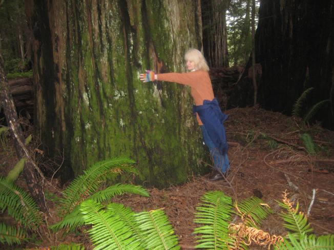 CA Redwood Forests